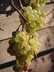 casa de vinuri odobesti
